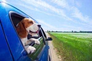 A dog sticking his head out of a car window on a scenic road.